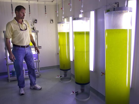 In this archive photo, Bob Wasno, the education and outreach coordinator for the FGCU Vester Marine and Environmental Science Research Field Station in Bonita Springs, looks at tanks used for algae culture to feed oysters at the field station.