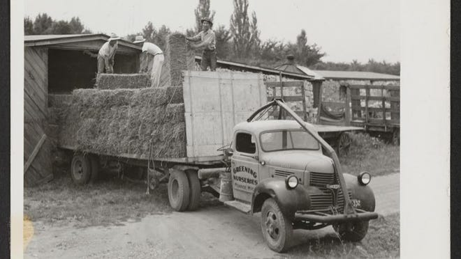 Scene at the Greening Nursery, Monroe, Mich., where about 20 young relocatees from the various relocation centers were employed in farm and nursery work. Here, three of the boys are seen unloading hay into the company's big barn. The photographer was Mace, Charles E. Monroe, Michigan.