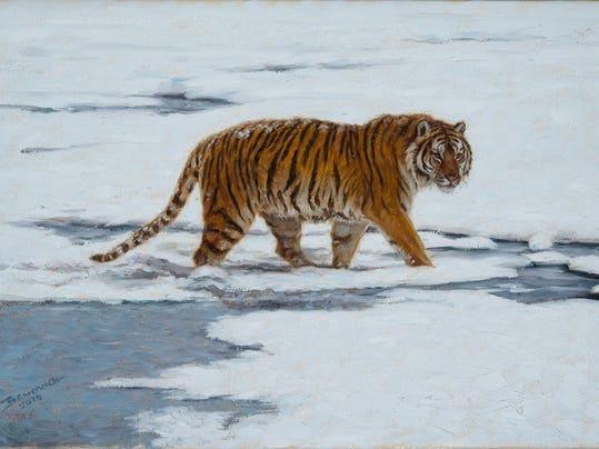 John Banovich Amur Tiger 8x12