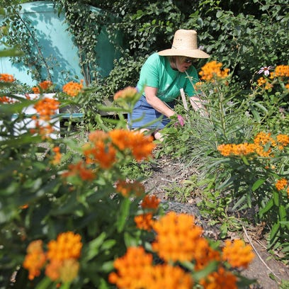 Rainy summer was more of a perk than problem for gardeners