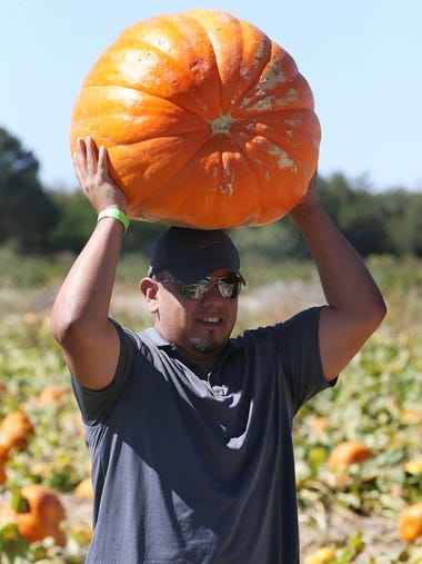 Carlos L. Garcia carries a large pumpkin out of the