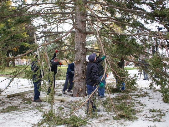 Volunteers, along with workers from the Michigan State Capitol Facilities team and Department of Technology, Management, and Budget help set the official State Capitol Christmas tree Saturday, Oct. 28, 2017, at the State Capitol in downtown Lansing.