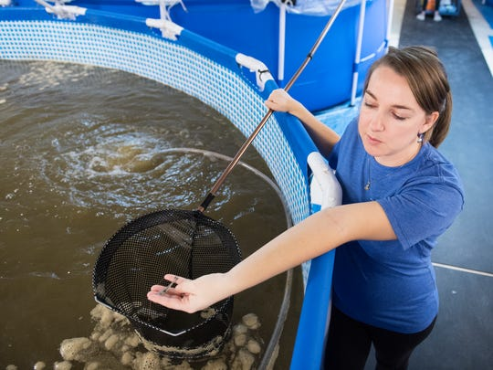 Valeska Minkowski holds a shrimp from one of her tanks at Urban Seas Aquaculture on Monday, December 4, 2017.
