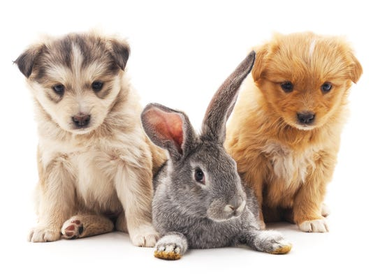Rabbit and dogs.