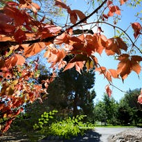 10 things to do with your kids this fall in Reno