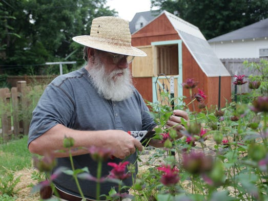 Rick Scarlet cuts Bee Balm in his backyard with his latest project Ð a solar greenhouse Ð in the background. He and his wife, Gloria, have a self-sufficient lifestyle - with minimal energy consumption, maximum food production and eco-friendly practices.