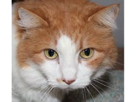 Meet the Cat of the Week
