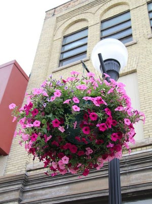 A flower basket hanging in downtown Crookston, on North Main