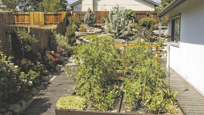 Raised bed gardens often do well in Nevada's challenging gardening climate.