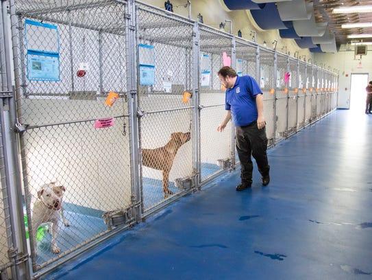 Escambia County Animal Control Director John Robinson checks on dogs at the Pensacola shelter on Wednesday.