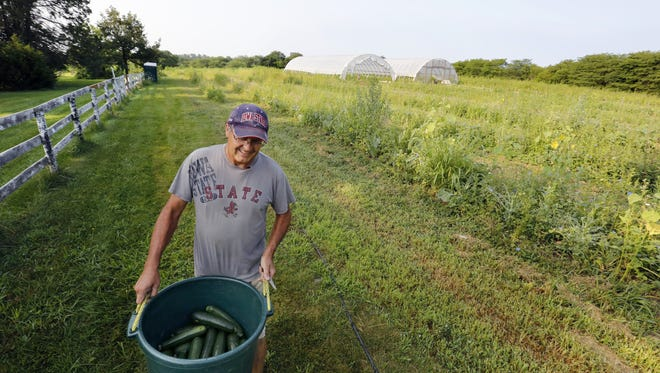 Denny Wimmer carries a bin of freshly harvested zucchini on his organic farm near Arispe last July 31. Denny left a sales career in Chicago three years ago to launch an organic operation on the family's 76 acres of land, which has been in the family since 1919.