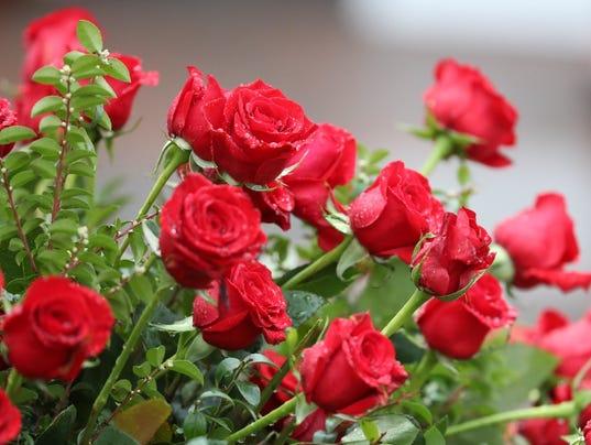 636302070461310236-Roses.JPG