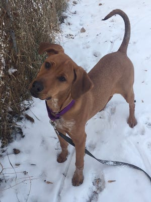 Lucy, a 6-month-old mixed breed, is outgoing and loves attention. She is spayed.