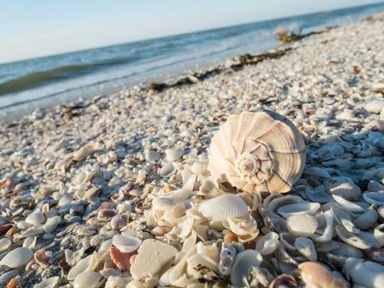 Florida Master Naturalist, Tony Mauriello, will be speaking to the Marco Island Shell Club about shelling, beach combing and more.