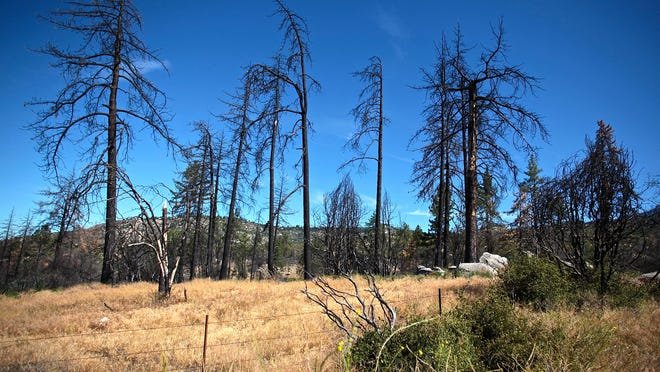 Charred trees remain standing after the two-year anniversary of the Mountain Fire, some marked with colored tape by firefighters, off Apple Canyon and near Bonita Vista road in Idyllwild on Tuesday.
