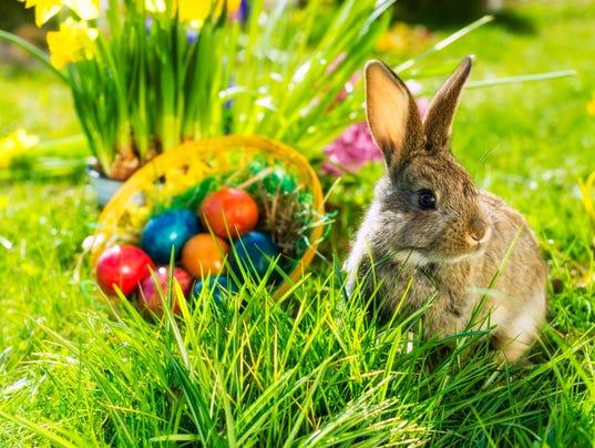 STOCK-EasterBunny