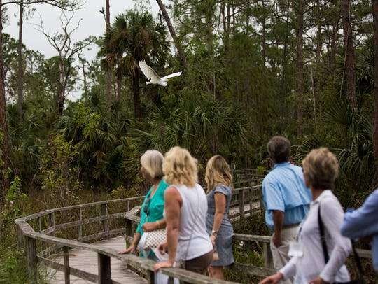Tourists look at a great egret fly over during a tour at Corkscrew Swamp Sanctuary east of Bonita Springs on Thursday, Nov. 16, 2017. About 60 leaders from Leadership Florida's Cornerstone XXXIV class visited Audubon's Corkscrew Swamp Sanctuary as part of the organization's educational program.