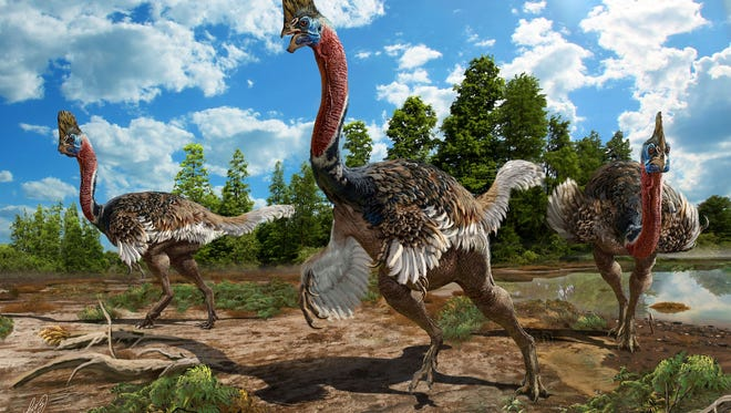 An artist's rendering of a group of Corythoraptors, which bear an uncanny resemblance to the living birds known as cassowaries, which live in the forests of New Guinea and northern Australia. The dinosaur version probably ran and flirted much as its modern-day twin does.