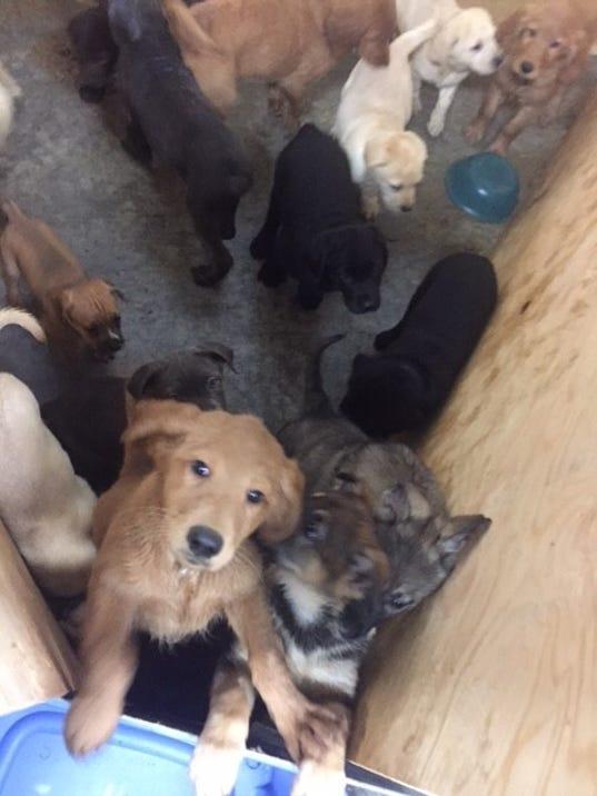 636209550935133884-puppies2.jpg