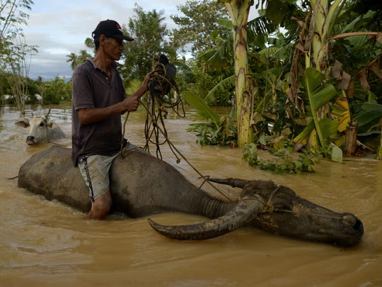 A farmer rides his water buffalo in floodwaters on Oct. 19, 2015, after Typhoon Koppu unleashed heavy rains in Barangay Camanutan in the Philippines.