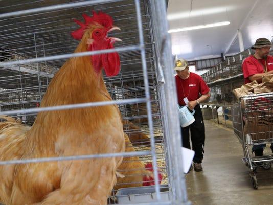 poultry barn 1.jpg