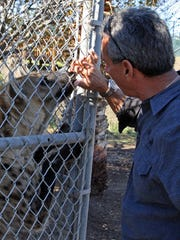 Charlie Sammut, director of the Monterey Zoo, allows Ed to sniff his hand