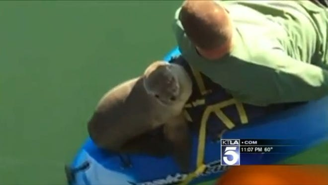 A family out for a kayak trip in California picked up an unexpected hitchhiker: a sea lion pup that hopped on for a 20-minute ride.