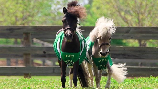 Horses Star and Huck have been named the official mascots of the FEI World Equestrian Games, taking place this fall in Tryon.