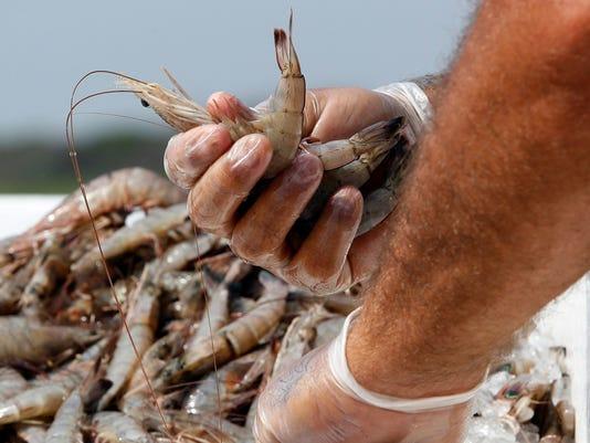 Shrimp-Murky Labeling.jpg