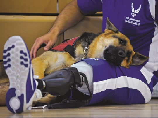 Kai, a service dog, lies on the lap of Staff Sgt. August O'Niell during volleyball practice at Joint Base Andrews, Md. O'Niell, a pararescueman, was wounded in July 2011 during a deployment to Afghanistan.