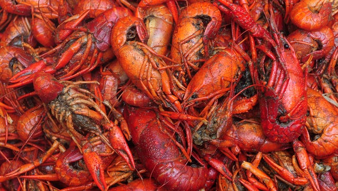 A batch of crawfish waits to be plated Saturday at the 16th annual Downtown Crawfish Jam, presented by the Hattiesburg Historic Neighborhood Association, Budweiser and the Southern Beverage Company.