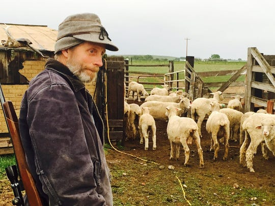 Five of Fort Shaw rancher Jay Skoog's sheep were killed