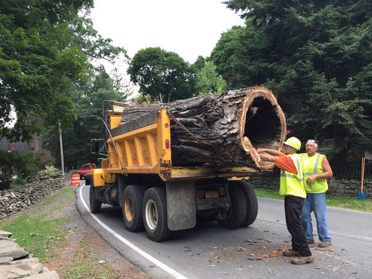 Workers remove a section of the historic Eastern cottonwood tree in Balmville Wednesday.