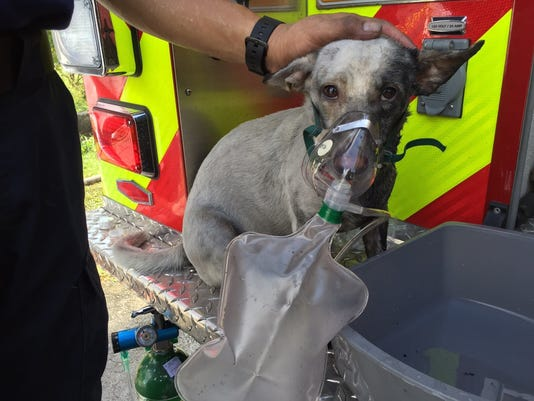 635791860338727761-GUATab-09-25-2015-PDN-1-A005--2015-09-24-IMG-dog-fire-1-1-H5C1CES3-L680796291-IMG-dog-fire-1-1-H5C1CES3