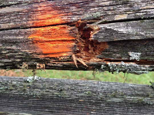 A bullet hole is marked by orange spray paint in the fence bordering the Marksville State Historic Site, which is adjacent to the site of the fatal shooting of 6-year-old Jeremy David Mardis.