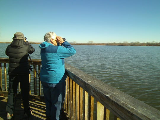 Pat Kelly's powerful binoculars bring details of plumage at the Observation Deck overlooking a large pond.