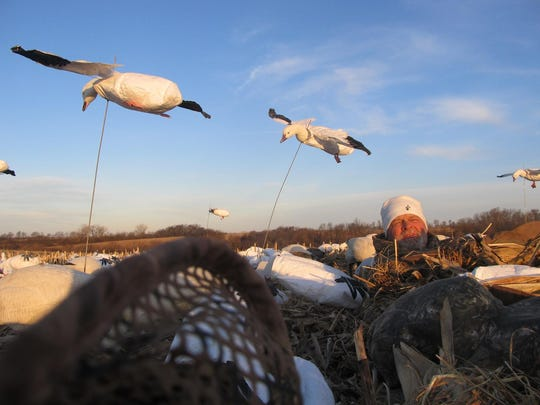 Outfitter Dan Guyer watches for geese as two flying
