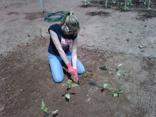 635955639600276182-Pieroth-gardening-2.jpg