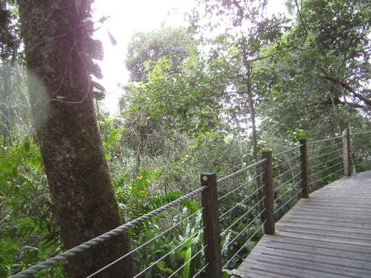 The Skyride cable car stops frequently so riders can dismount and walk around the rainforest.