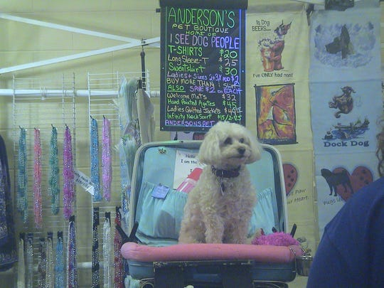 Along with competition, dog shows often include an area for vendors. Most vendors also show their dogs and travel the show circuit.