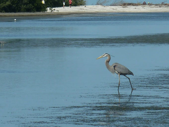 Rookery Bay is hosting a Birds of the Beach workshop