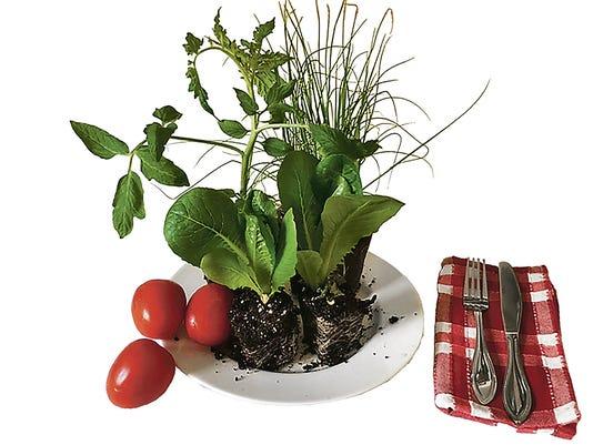 636264059745205124-Grow-a-salad-by-Alice-Crann-Good.jpg