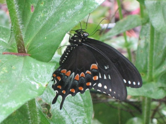 Learn about Michigan's butterflies.