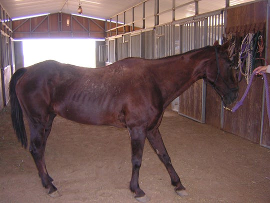 This 30-year-old mare will be up for auction on June