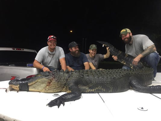 636386005241974495-Alligator.jpg