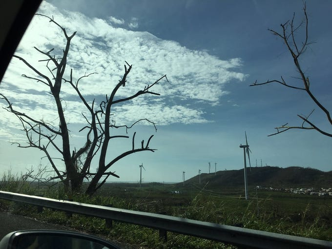 Broken wind turbines and trees stripped bare by Hurricane