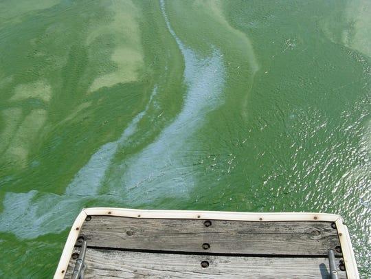 Algae clog waters on Petenwell Flowage in 2009.