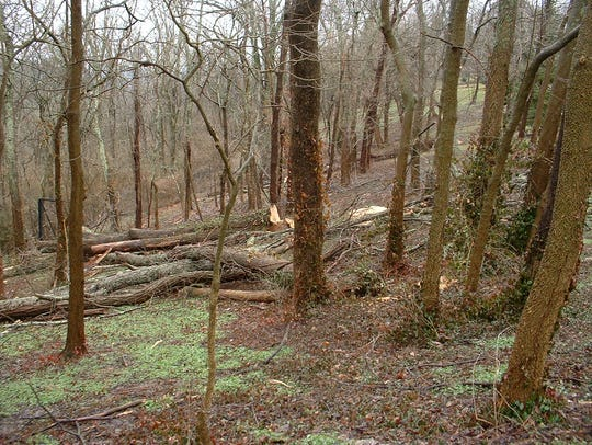 A significant number of ash trees were cut down in