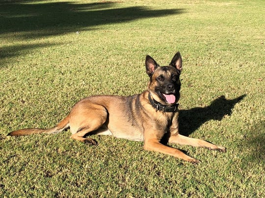 Phoenix Police Department: Died April 18, 2018. Bane, a 3-year-old Belgian Malinois dog, was killed by a suspect as police moved in to arrest a man who was wanted for carjacking and leading police on a prolonged pursuit through Phoenix, which was shown live on TV stations. Bane served with the Phoenix Police Department for a little more than a year.