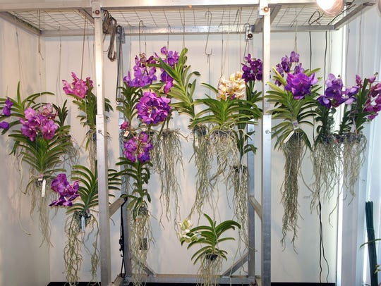 Orchids at last year's show and sale.